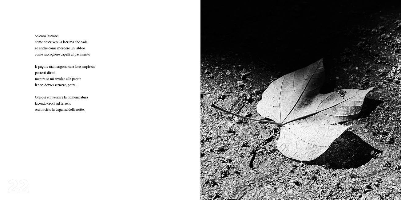 Cactus - Panico/Anatrella 2