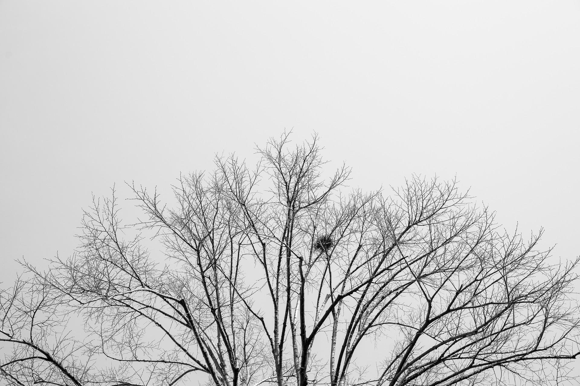 Il cielo sta fuori – Francesco Sassetto